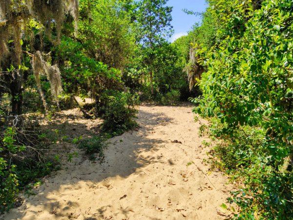 Ambiente de dunas recoberto por vegetação de restinga